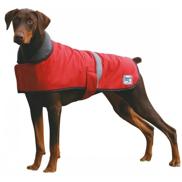 Dog Coat Competition Research Survey | Competition Rules