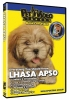LHASA APSO DVD - Click for more info