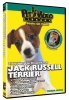 JACK RUSSELL TERRIER DVD - Click for more info