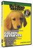 GOLDEN RETRIEVER DVD - Click for more info