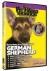 GERMAN SHEPHERD DVD - Click for more info