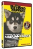 SIBERIAN HUSKY DVD - Click for more info