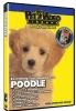 POODLE DVD - Click for more info