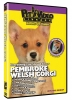 PEMBROKE WELSH CORGI DVD - Click for more info