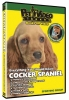 COCKER SPANIEL DVD - Click for more info