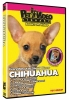 CHIHUAHUA DVD - Click for more info