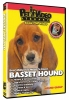 BASSET HOUND DVD - Click for more info