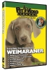 WEIMARANER DVD - Click for more info