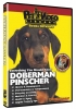 DOBERMAN PINSCHER DVD - Click for more info
