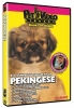 PEKINGESE DVD - Click for more info