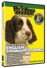 ENGLISH SPRINGER SPANIEL DVD - Click for more info