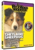 SHETLAND SHEEPDOG DVD - Click for more info