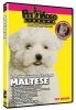 MALTESE DVD - Click for more info