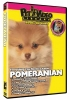 POMERANIAN DVD - Click for more info