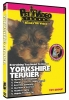 YORKSHIRE TERRIER DVD - Click for more info