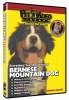 BERNESE MOUNTAIN DOG DVD - Click for more info