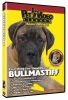BULLMASTIFF DVD - Click for more info