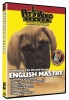 ENGLISH MASTIFF DVD - Click for more info