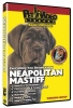 NEOPOLITAN MASTIFF DVD - Click for more info