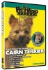 CAIRN TERRIER DVD - Click for more info