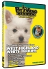WEST HIGHLAND WHITE TERRIER DVD - Click for more info