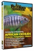 SETTING UP & MAINTAINING AN AFRICAN CICHLID AQUARIUM - Click for more info