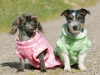 FLEECE DOG JACKET 50cm - Green w/Hearts - Click for more info