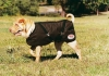 ThermoMaster OILSKIN DOG COAT Size 12 (31cm) - Click for more info