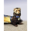 FERRET HARNESS Blue w/Adj Leash (1.2M-2.4M) - Click for more info