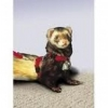 FERRET HARNESS Red w/Adj Leash (1.2M-2.4M) - Click for more info