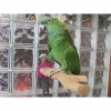 Polly's MULTI-GRIP FLIP PERCH Large 30x7.5x3cm - Click for more info