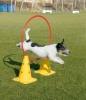 AGILITY HULA HOOP 60cm (Flat High-Impact PP) - Click for more info